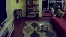 Video | Espíritu mueve las cosas y los gatos intentan cazarlo
