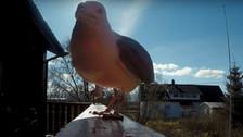 Gaviota roba GoPro y esta es su sorprendente grabación
